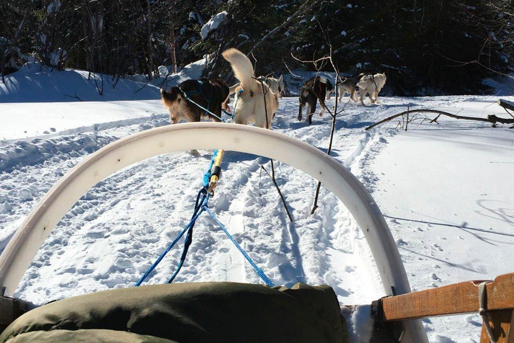 Chien de traineau en hiver